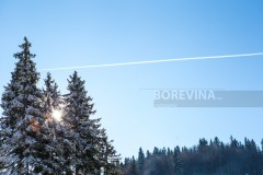 Pine forest covered with snow and behind is a beautiful clear blue sky and airplane trail. There is a sunny day on the mountain.